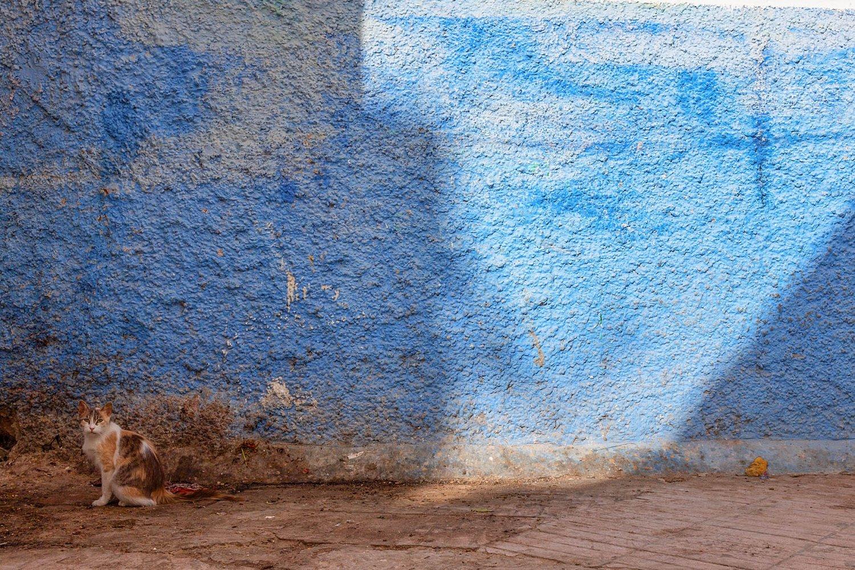 Essaouira in un giorno: parete azzurra con gatto