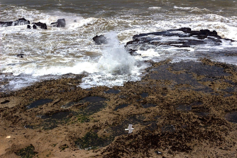 essaouira città di vento: scogli e oceano