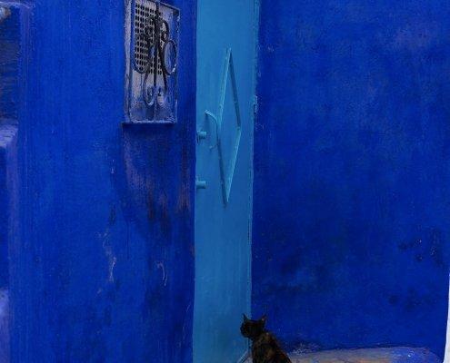 Chefchaouen: porta blu e gatto nero